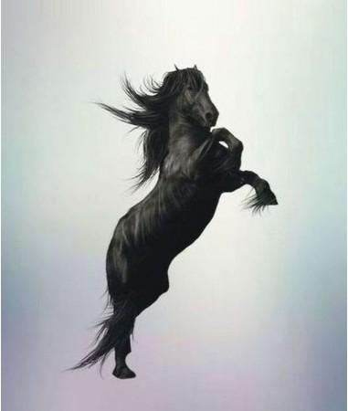 Vše pro jezdce,koníky i poníky